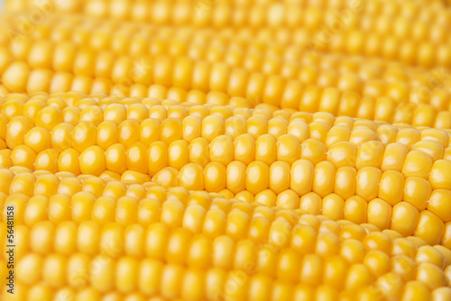 golden corn textured  background
