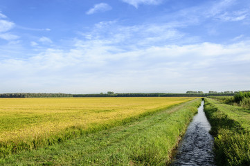 Lomellina (North Italy) Rice fields and channel