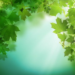 Summer or spring green background with greenery foliage