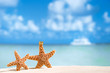 starfish  with ocean , beach and seascape