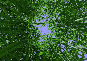 Bambuswald im Zenit