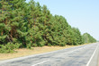 Pine forest and road on blue sky background