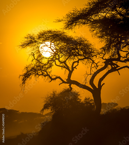 african sunset in savannah