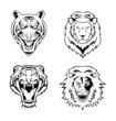 Lion Tiger