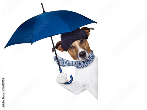canvas print picture rain umbrella dog