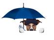 rain umbrella dog