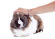 stroking rabbit
