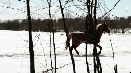 "girl cowboy walks on a horse on nature - driving style ""lynx"""