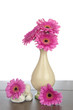 Pink Gerbera in vase and white stones
