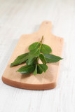 Branch of laurel bay leaves on a wooden board
