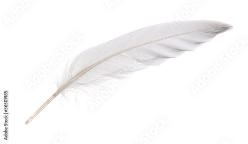 isolated white goose feather