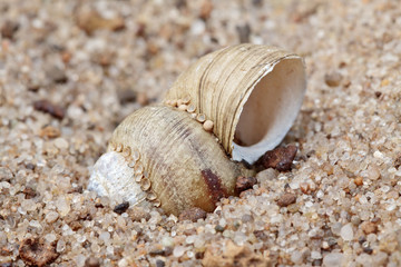 Close-up of the shell on sand background with selective focus