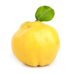 Sweet quince with leaves