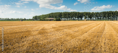 Stubble field after harvesting grain