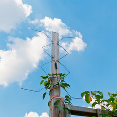 Homemade digital outdoor TV antenna.