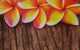Frangipani flower on the old wood background