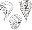 Aggressive lion heads