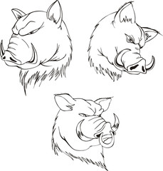 Aggressive boar heads