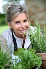 Senior woman preparing aromatic herbs in pot