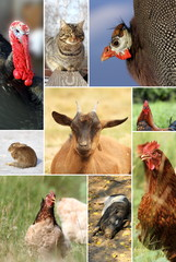 collage with different farm animals