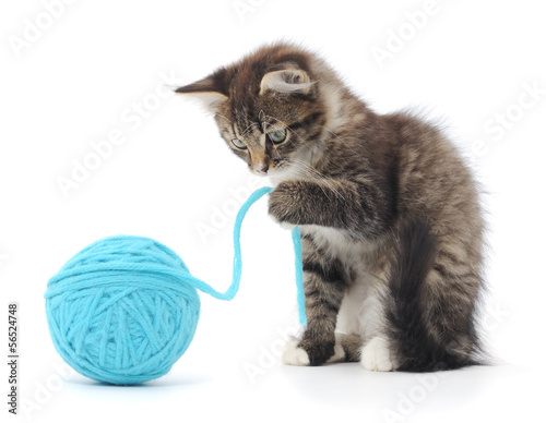 Cat with ball of yarn - 56524748