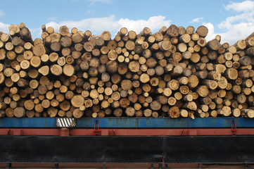 timber ship