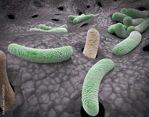 Vista microscopica Bacterias