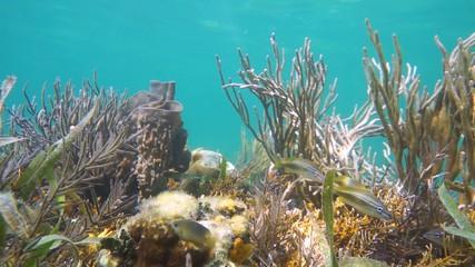 Seafloor in a coral reef, Caribbean sea