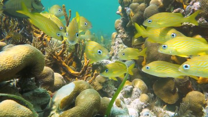 School of colorful tropical fish in a coral reef