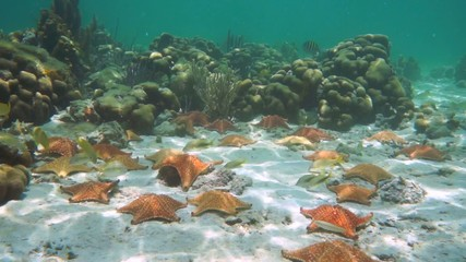 Plenty of starfish underwater in a coral reef