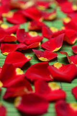 Set of pile of rose petals on green mat