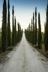 Viale di cipressi