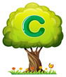 A tree with a letter C