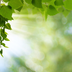 Natural freshness. Abstract environmental backgrounds for your d