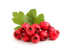 Red hawthorn berries with leaves.