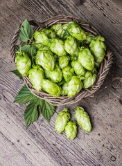 fresh hop cones in a basket