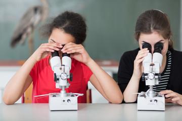 Mikroskopieren im Bio-Unterricht