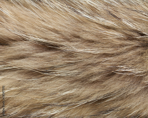 abstract raccon fur background