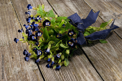 Bouquet of fresh blue torenia flowers.