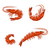 Shrimp set. Vector