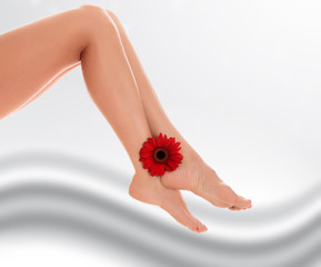 Female legs with red gerbera flower on grey blurred background