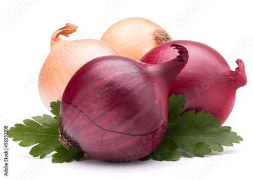 Onion vegetable bulb and parsley leaves still life