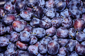 Ripe plum in the market  after harvest