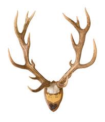 Huge stag antlers on wood board, over 7 kilos, hunted in 1898