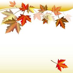 Herbstblätter. Ahornblätter Laub