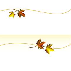 Herbstblätter. Ahornblatt. Laub
