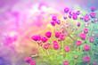 Pink flower (purple flower) in a meadow