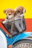 dog on basket