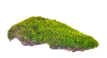 green moss with brown soil on white