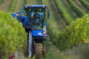 Vendanges mécanique du raisin dans le vignoble